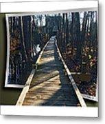 Abbotts Nature Trail Metal Print