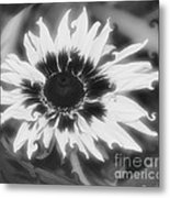 Abstract Daisy Metal Print