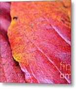 Abstract Dogwood In Autumn Metal Print
