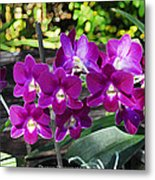 Accented Purple Orchid  Metal Print
