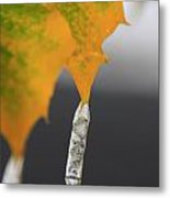 Accents In Ice Metal Print