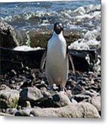 Adelie Penguin 21 Metal Print