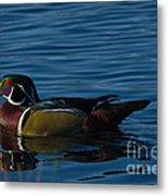 Adult Male Wood Duck Metal Print
