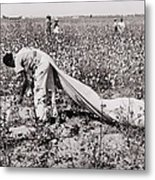 African American Day Laborer Picking Metal Print by Everett
