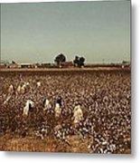African American Day Laborers Picking Metal Print