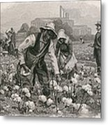 African Americans Pick Cotton Metal Print by Everett