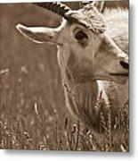 African Grassland Feeder 2 Metal Print