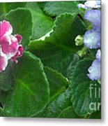 African Violets Intertwined I Metal Print