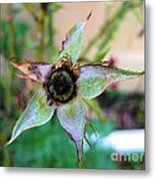 After The Petals Fall The Star Metal Print