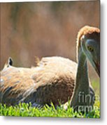Afternoon Reprieve Metal Print