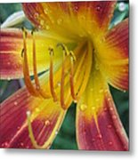 Afternoon Storm Metal Print by Todd Sherlock