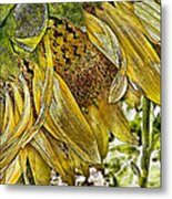 Afternoon Sunflower Metal Print
