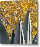 Agave Spikes In Autumn Metal Print