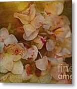Aged Hydrangeas With Texture Metal Print