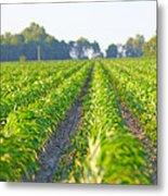 Agriculture- Corn 1 Metal Print