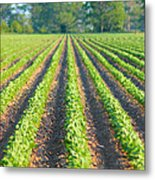 Agriculture-soybeans 5 Metal Print