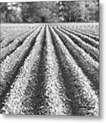 Agriculture-soybeans 6 Metal Print