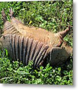 Alabama Road Kill Metal Print
