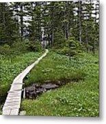 Alaska Meadow Trail Metal Print