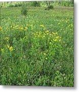 Alberta Summer Meadow Metal Print