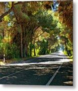 Albufera Road To El Palmar. Valencia. Spain Metal Print