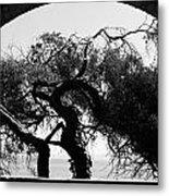 Alcatraz Tree Metal Print by Ty Helbach