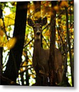 Alert Doe Metal Print by Scott Hovind