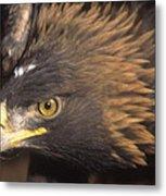 Alert Golden Eagle Metal Print