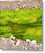 Algae Bloom Natural Abstract Art Of Nature Metal Print
