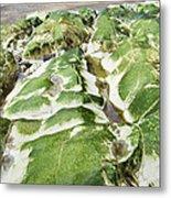 Algae Covered Rocks Metal Print