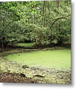 Algal Bloom In Pond Metal Print by Michael Marten