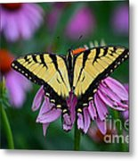 All Fanned Out Metal Print