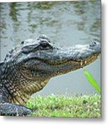 Alligator Cameron Prairie Nwr La Metal Print
