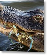Alligator Catches Two Crabs Metal Print