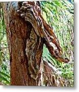 Alligator Cypress Knot Metal Print