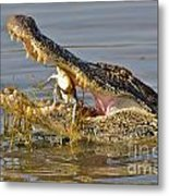 Alligator Get Lunch Metal Print