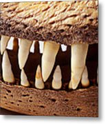 Alligator Skull Teeth Metal Print