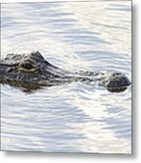 Alligator With Sky Reflections - A Closer View Metal Print