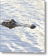 Alligator With Sky Reflections Metal Print