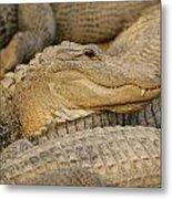 Alligators Metal Print