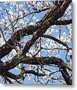 Almond Blossom Metal Print