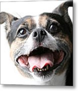 Almost A Jack Russell Metal Print