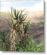 Aloe Aloe  Metal Print