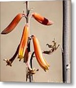 Aloe Flower And Stem Metal Print