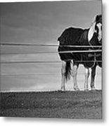 Alone On The Hill Metal Print