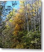 Along The Back Road Metal Print