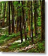 Along The Hiking Trail Metal Print