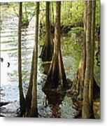 Along The Waccamaw - Cypress Swamp Metal Print