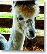 Alpaca Closeup Metal Print