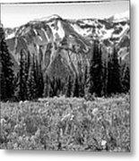 Alpine Meadow Viii At Mount Rainier Metal Print